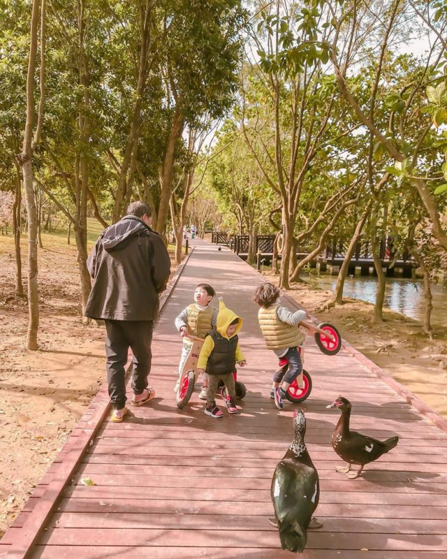 桃園一日遊 桃園景點 八德埤塘生態公園 親子景點 桃園公園