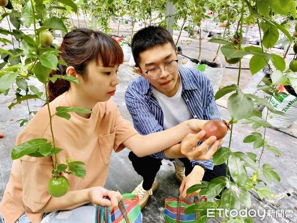 ▲農場內一年四季都可以摘百香果,多樣品種且相當香甜,可以體驗一日農民的辛勞。(圖/記者簡仲豪攝)
