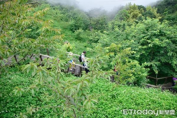 嘉義兩天一夜|在雲霧繚繞中嚐野菜,坐擁山林美景的自然之旅