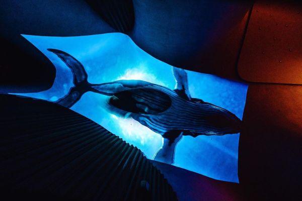 台中國家歌劇院|「光之曲幕」|光影秀|海洋