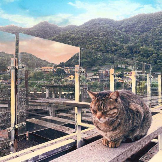 瑞芳侯硐貓村