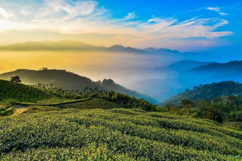2021跨年|2021曙光|嘉義景點|梅山太平碧湖觀光茶園