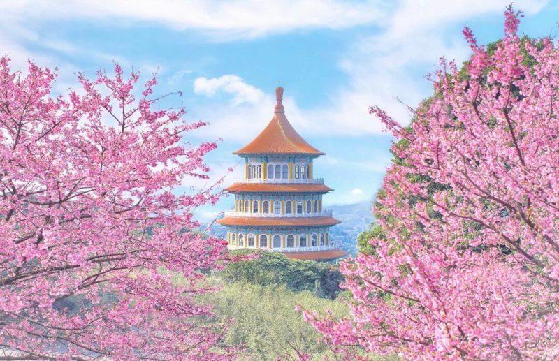 天元宮|2021賞櫻|2021賞櫻景點|天元宮怎麼去|淡水景點|賞櫻景點