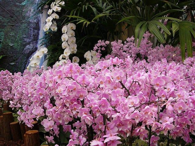 台灣蘭花生物科技園區
