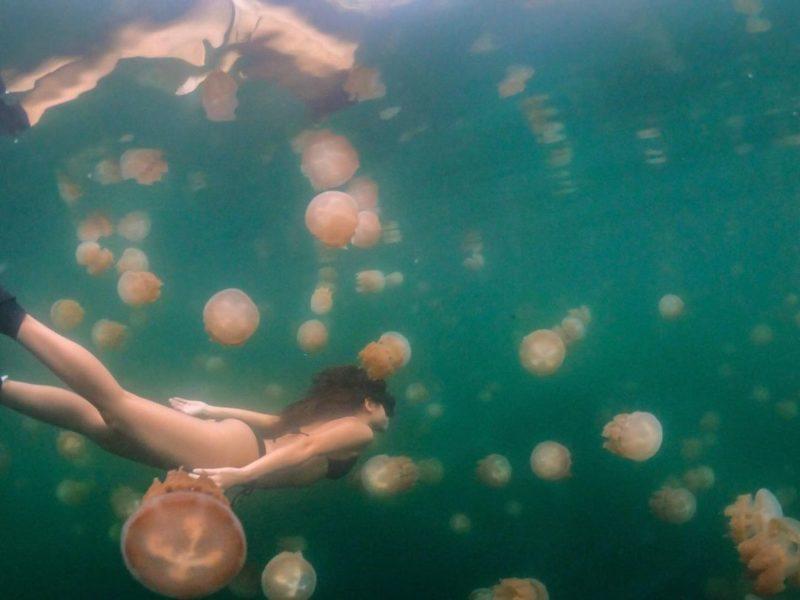 出國 帛琉玩什麼?關於臺灣帛琉旅遊泡泡的小知識 交通總整理   生活   NOWnews今日新聞
