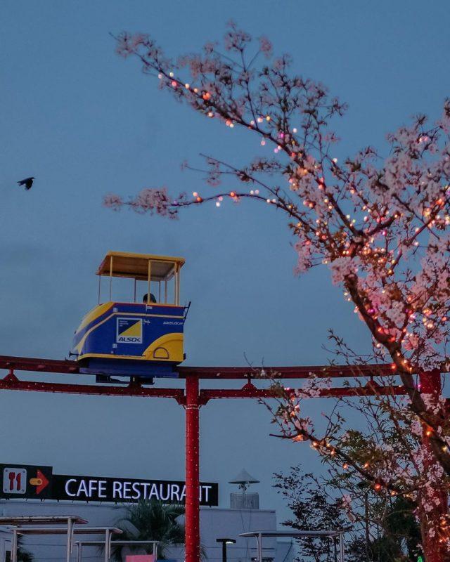 日本遊樂園 讀賣樂園 櫻花