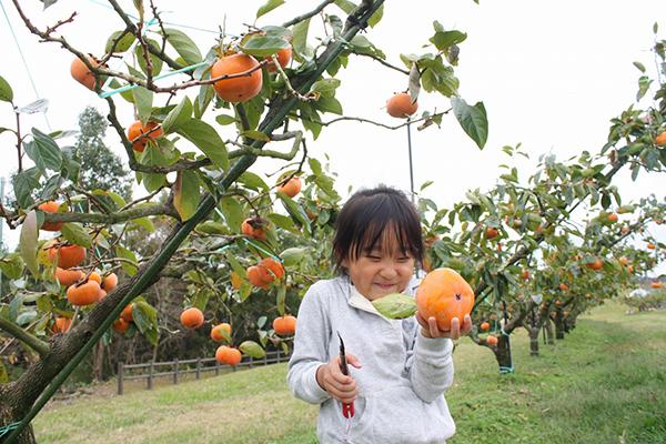 日本中部自助旅行-濱松市採果體驗