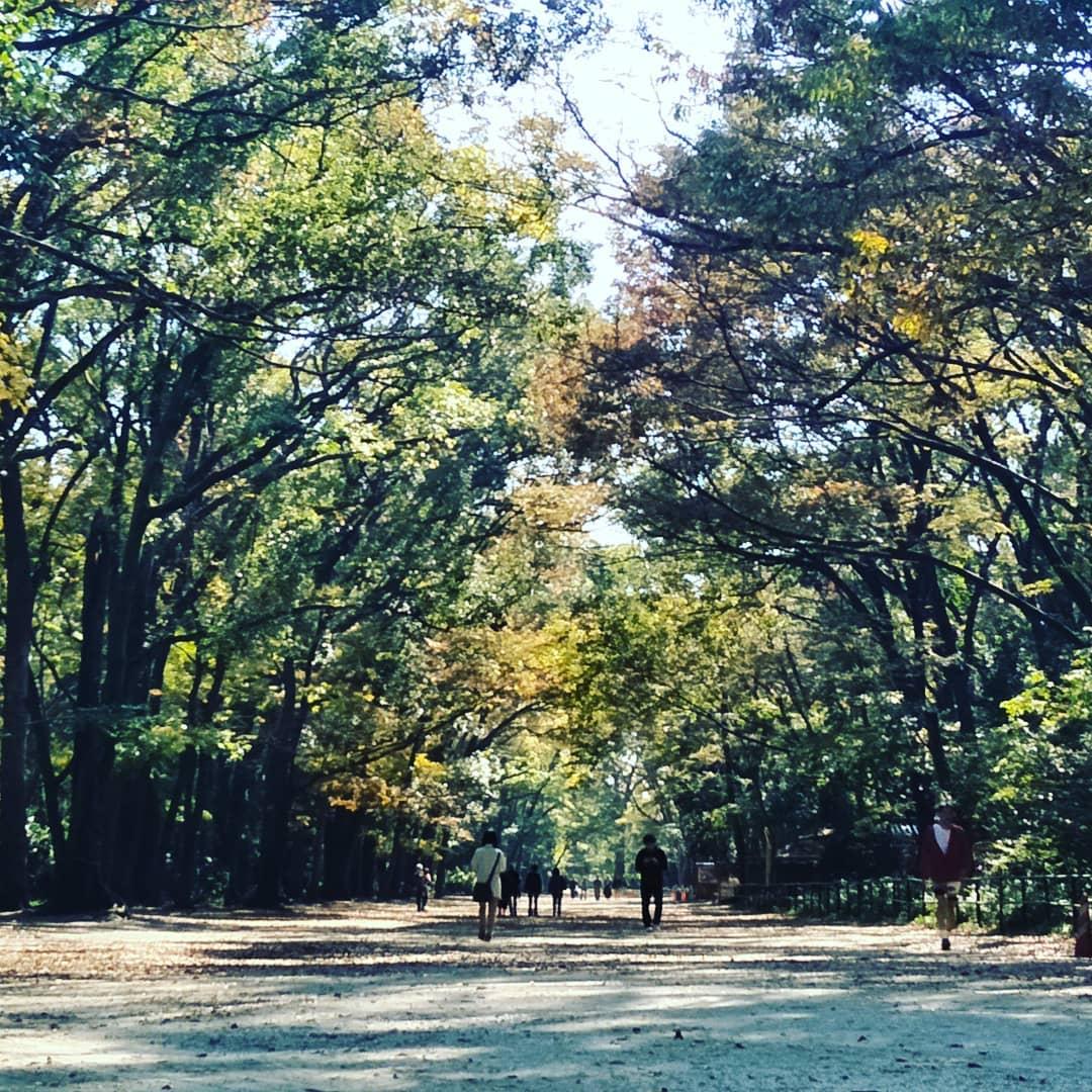 下鴨神社 糺之森