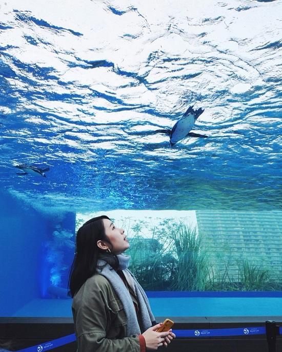 東京池袋景點推薦陽光水族館