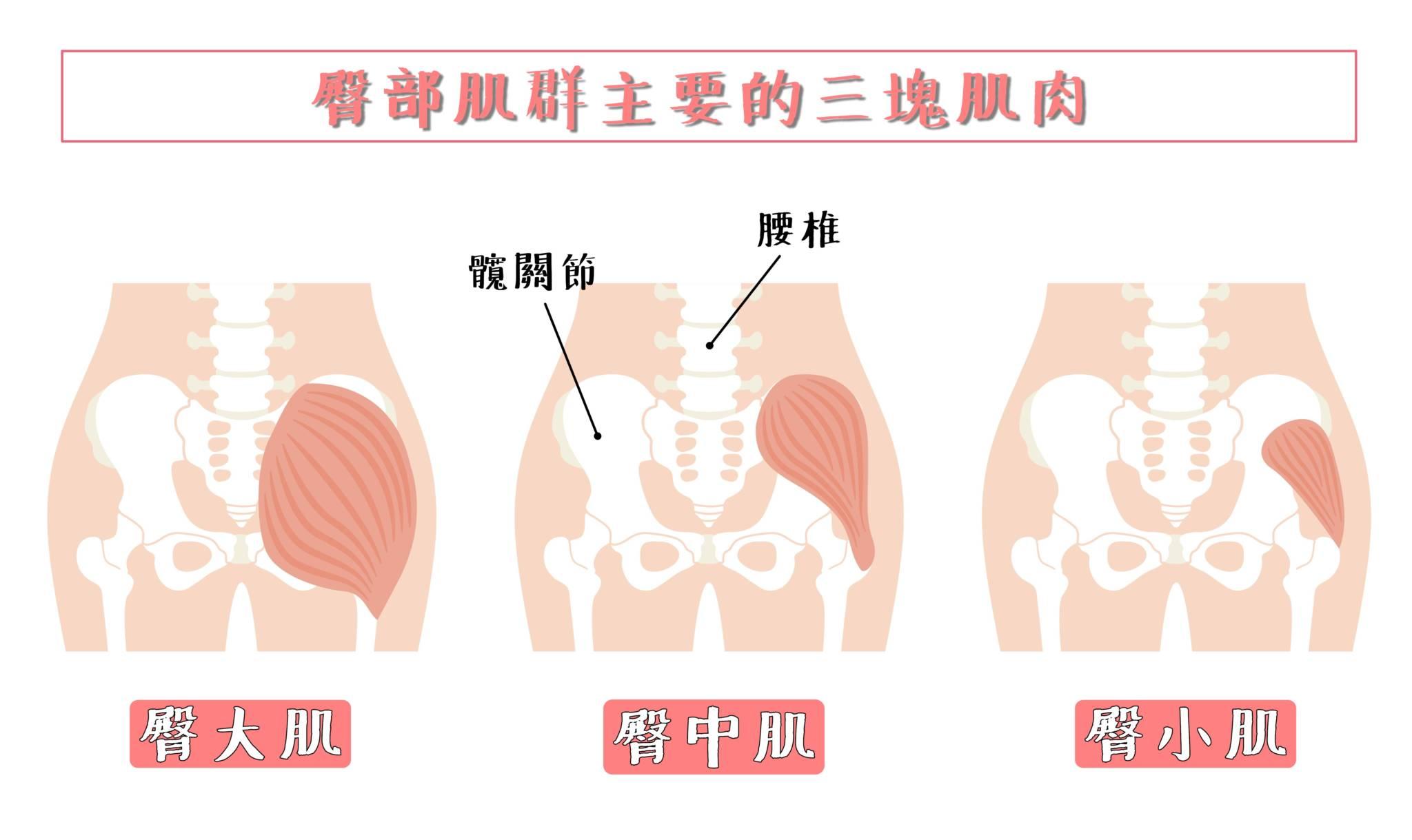 居家臀腿訓練-臀部三大肌群介紹