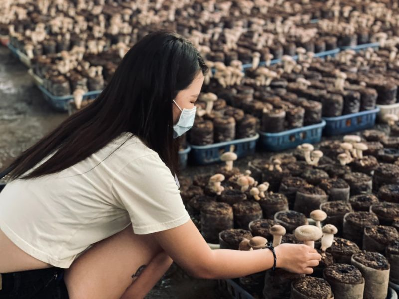 香菇街 百菇莊