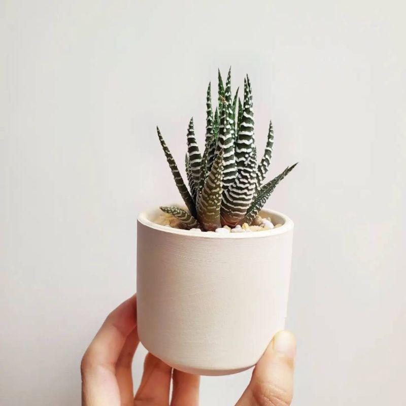 居家儀式感-小植栽