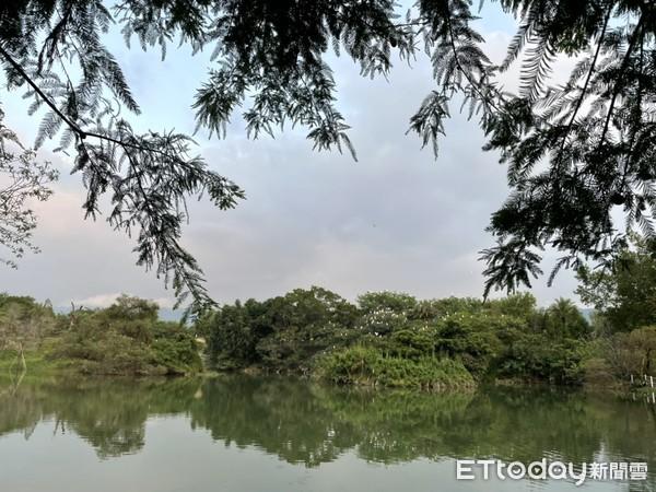 ▲傍晚還可以在森林玻璃屋旁的湖畔欣賞大群黃頭鷺棲息的壯觀風景。