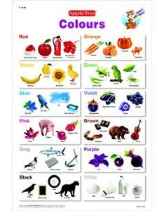 Buy apple tree colors preschool charts inch wall also rh shoppingdiff