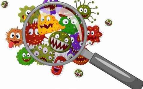 belflora-feljavitasa-imune-bio