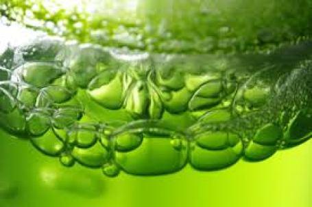 alga-kapszula-mellekhatas-pozitivan