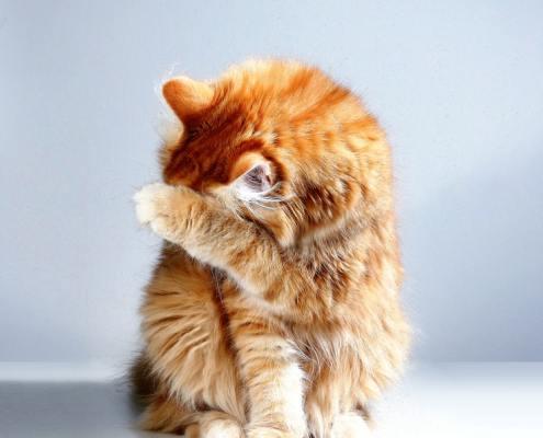 macska-egeszsege-algaval
