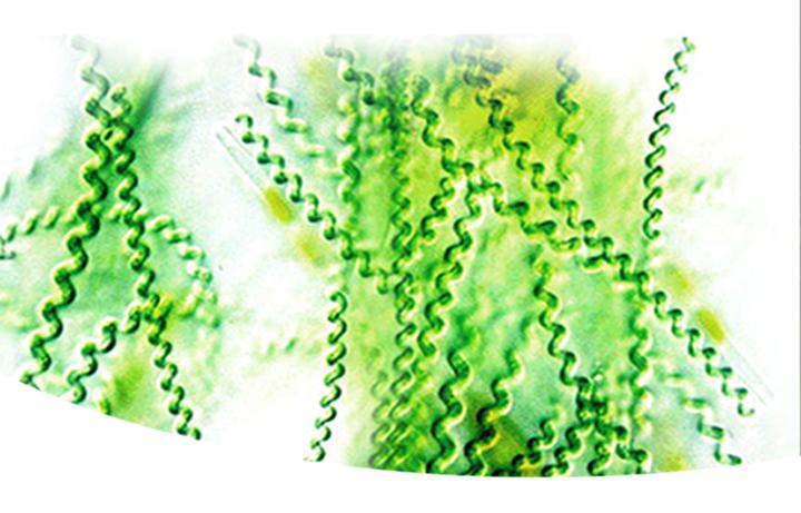 wellstar-green-gold-imune-helyet