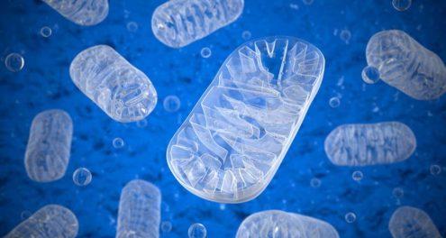 alga-hatasai-mitokondriumokra