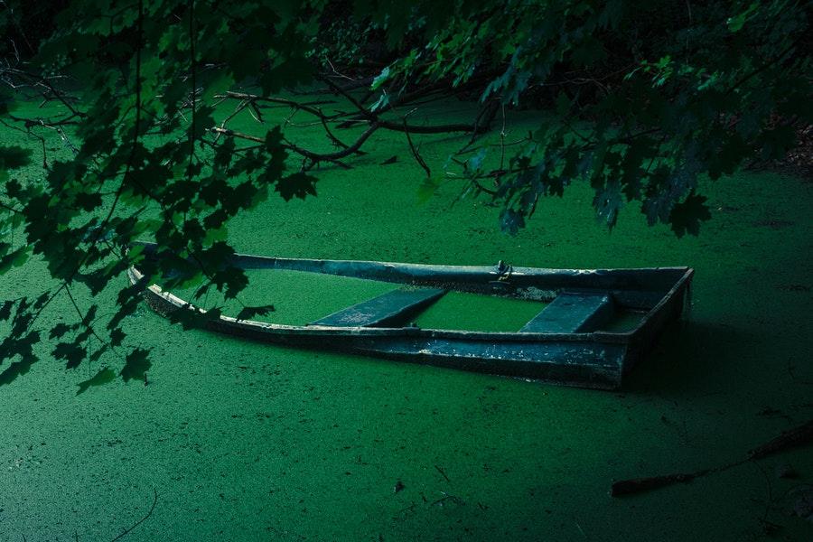 alga-viragzas-a-tavon