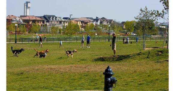 dog park image for blog