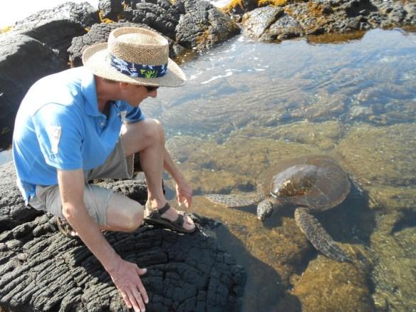 Sea turtle come to me