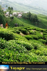 What to see in Darjeeling, the Tea Country