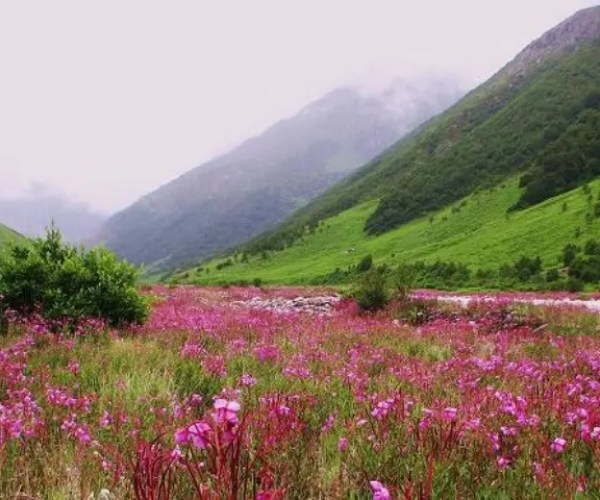 Uttarakhand Valley of Flowers