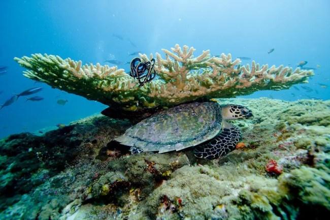 Honeymoon Trip to The Maldives