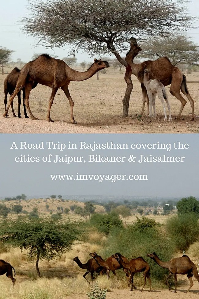 road trip in Rajasthan