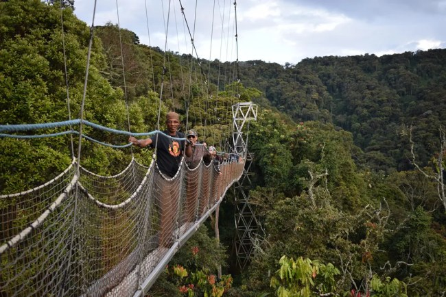 Canopy Walk, Nyungwe National Park