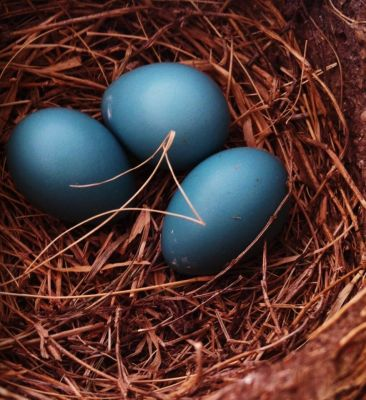 Celebrating Life - Blue Eggs - In Due Time Blog
