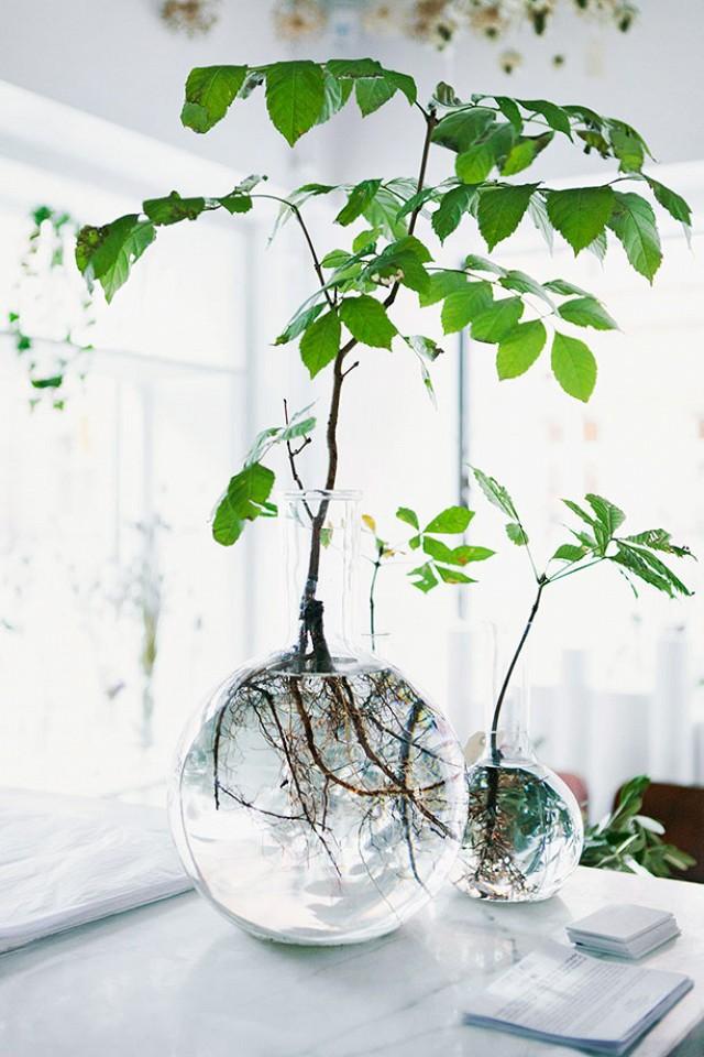 Water plants in clear glass jars