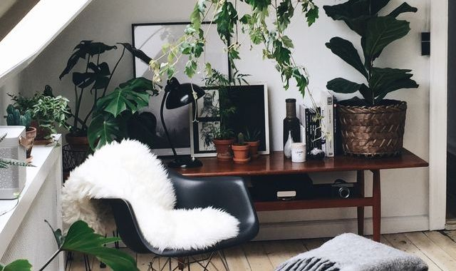 cosy corner with chair and plants