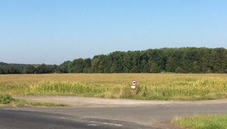 Sc5b, Teilfläche mit Blick auf das Naturschutzgebiet (Wald).