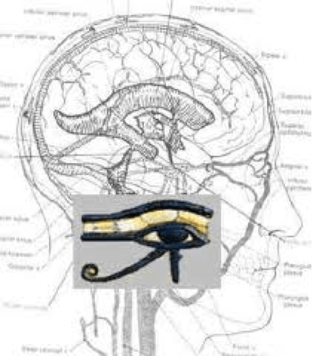 Pineal Gland – Quantum Life Source