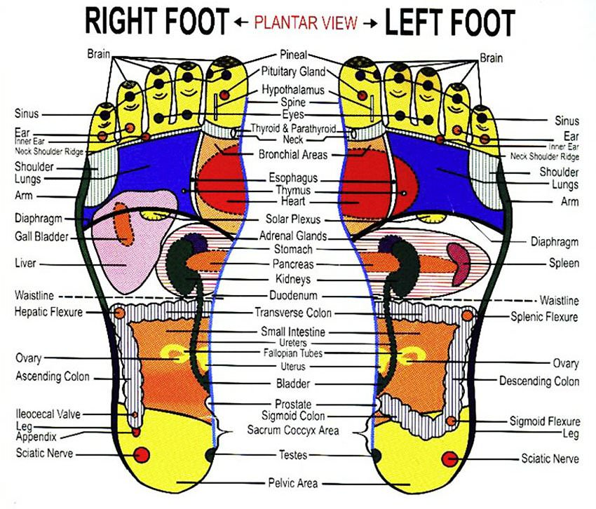 Foot Reflexology - An Easy to Follow Step-by-Step Guide