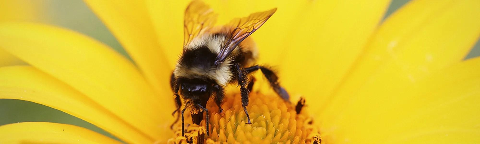 România a devenit cel mai mare producător european de miere de albine