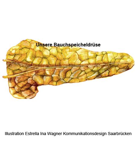 Pankreas, Bauchspeicheldrüse