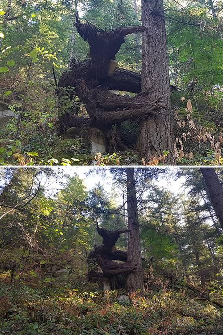 02 Bikin Takut aja Liatnya, 8 Foto Pohon ini Malah Terlihat Seperti Monster yang mau makan Orang!