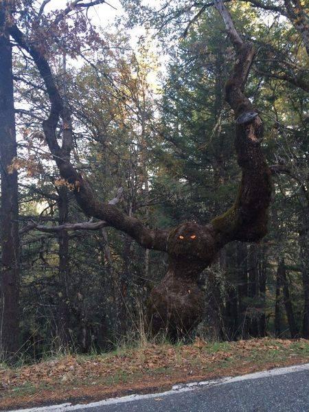 03 Bikin Takut aja Liatnya, 8 Foto Pohon ini Malah Terlihat Seperti Monster yang mau makan Orang!