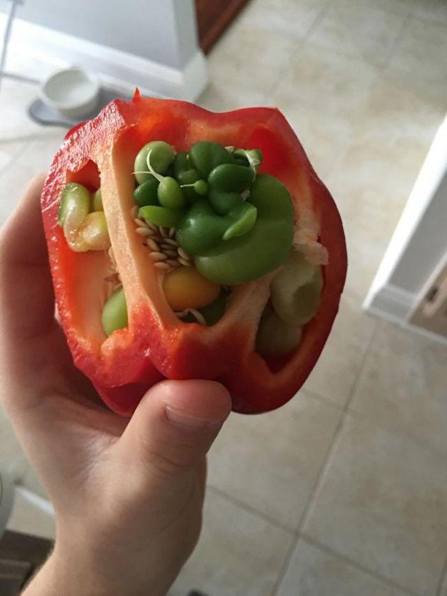 2 20 10 Gambar Ini Perlihatkan Jika Buah dan Sayur Bisa Berubah Jadi Seperti ini. Mau Liat!