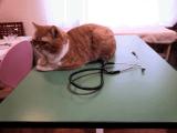 当院の飼い猫です。名前はどんちゃ☆