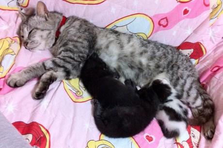 保護された当時の当院の飼い猫クルミと仔猫たち
