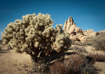 JoshuaTree2015Edited-37