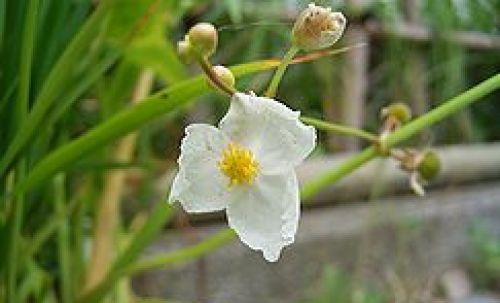 目指したキッカケは「一輪の花」