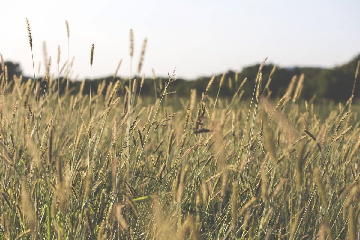 Finding Bethel in a Wheat Field