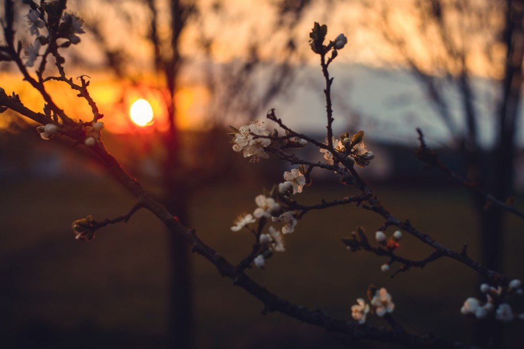 """Featured image for """"Longing for Spring: Songs of Lament"""""""