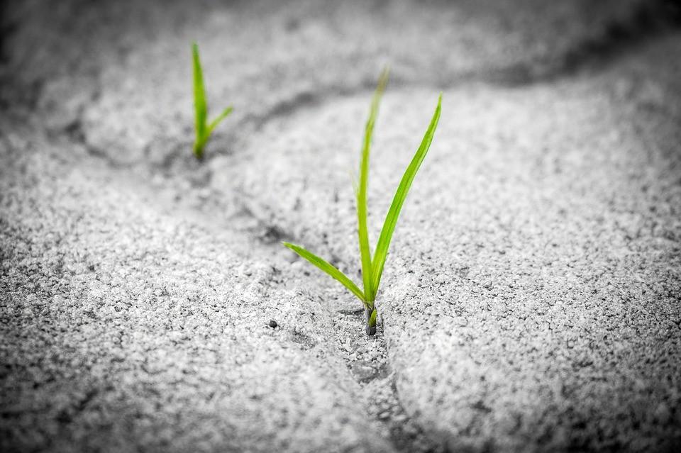 Watering Hope