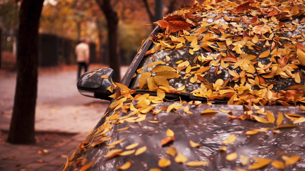 Autumn Falling Leaves Wallpaper In Amp Out Car Wash Protect Your Car From Fall Leaves In
